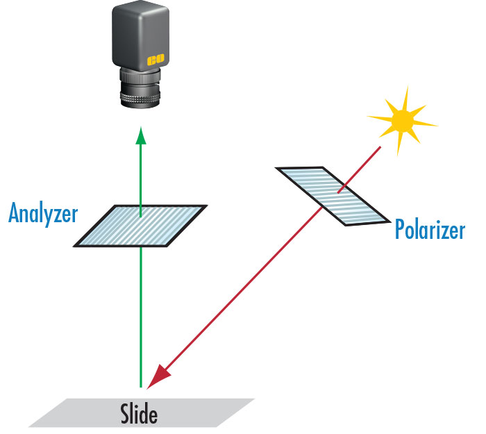 Figure 9: This imaging scheme is one way to eliminate or reduce scatter, glare, or hot spots. The light source is polarized by the polarizer and the reflected light that will be imaged is polarized once more, this time by the analyzer.