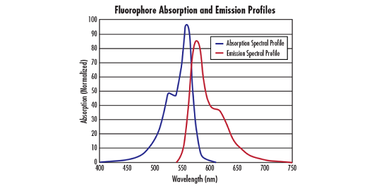 Fluorophores and Optical Filters for Fluorescence Microscopy